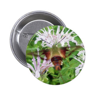 Hummingbird Clear Wing Moth Coordinating Items Pinback Button