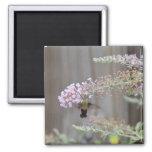 Hummingbird Clearwing Moth Blank Card Refrigerator Magnets
