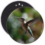 Hummingbird, colossal button