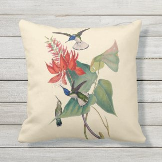 Hummingbird Coral Bean Outdoor Throw Pillow 16X16