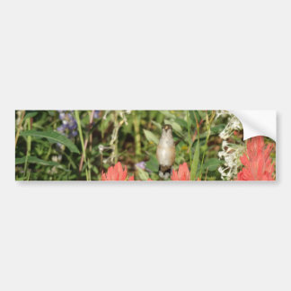 hummingbird coral red flowers bumper sticker