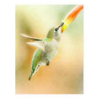 Hummingbird early morning flight postcard