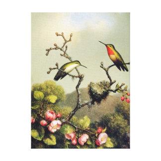 Hummingbird Family and Apple Blossom Canvas Print