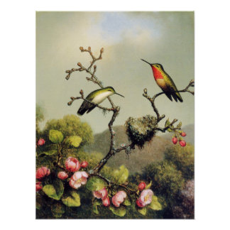 Hummingbird Family and Apple Blossom Poster