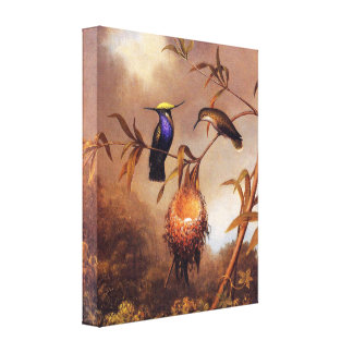 Hummingbird Family Stretched Canvas Prints