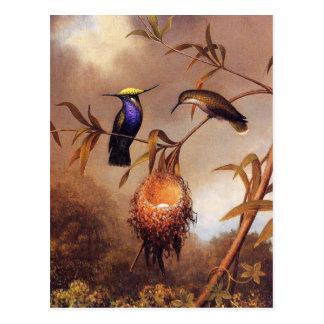 Hummingbird Family Postcard