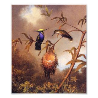 Hummingbird Family Print