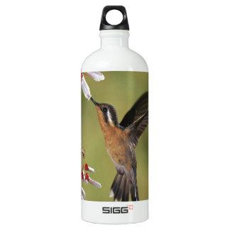 Hummingbird Feast Aluminum Water Bottle