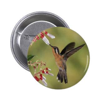 Hummingbird Feast Pin