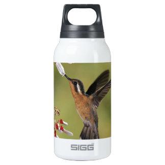 Hummingbird Feast Thermos Water Bottle