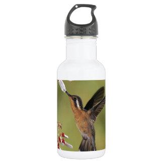 Hummingbird Feast Water Bottle