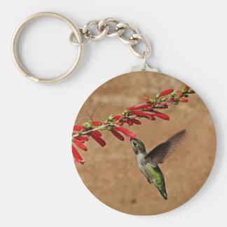 Hummingbird feeding at the garden keychain