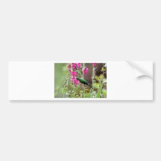 Hummingbird feeding on nectar bumper sticker