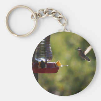 Hummingbird Feeding Time Basic Round Button Keychain