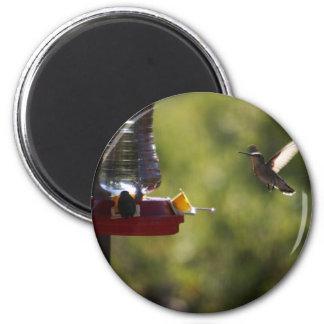 Hummingbird Feeding Time Fridge Magnet