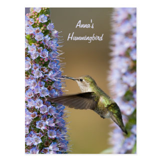 Hummingbird Flower Custom Postcard