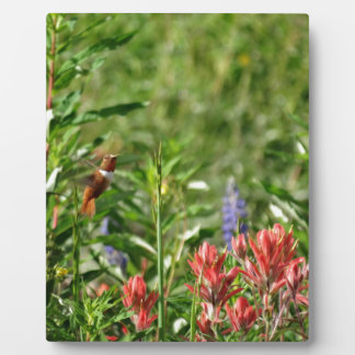 Hummingbird Flowers Plaques