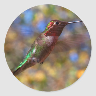 Hummingbird flying classic round sticker