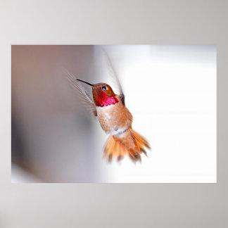 Hummingbird Flying Photo Posters