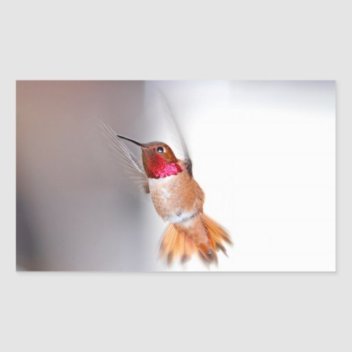 Hummingbird Flying Photo Stickers