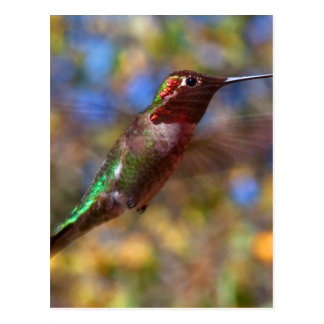 Hummingbird flying postcard