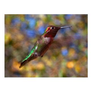 Hummingbird flying postcard