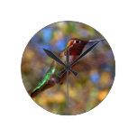 Hummingbird flying round clock