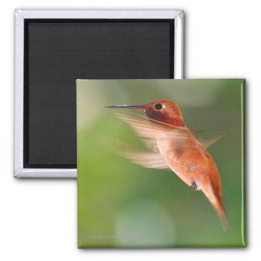 Hummingbird Fridge Magnet