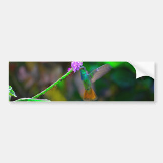 Hummingbird Garden Bumper Sticker