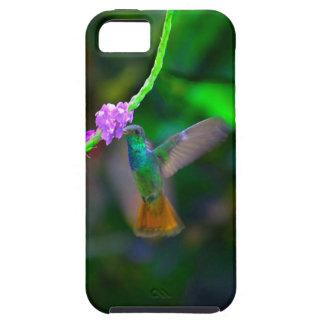 Hummingbird Garden iPhone 5 Cover