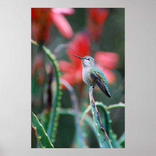 Hummingbird Garden Print