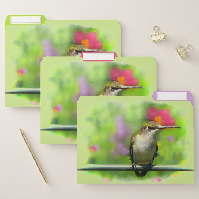 Hummingbird Green File Folder Set