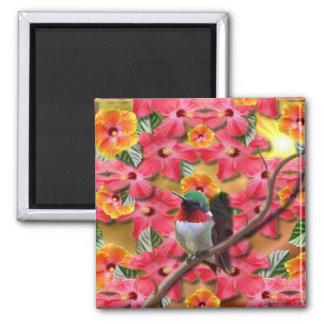 Hummingbird Haven Magnet