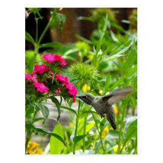 HummingBird Heaven Postcard
