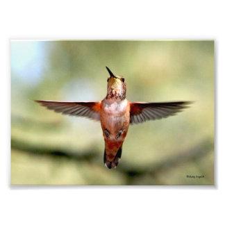 Hummingbird Hello Photo Print
