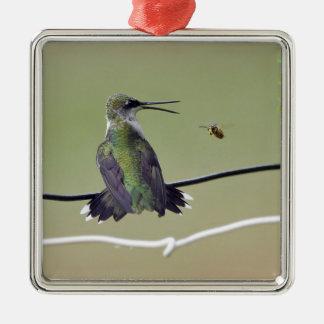 Hummingbird & Honey Bee Ornaments