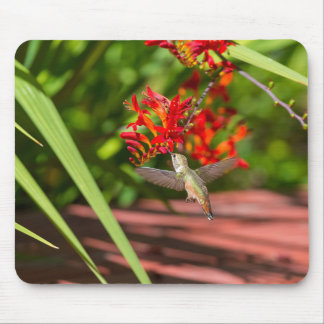 Hummingbird hovering over red Crocosmia feeding Mouse Pad