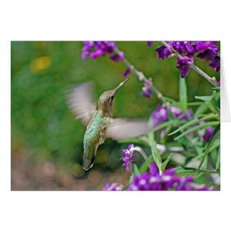 Hummingbird II Card
