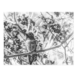 Hummingbird in Black and White Postcard
