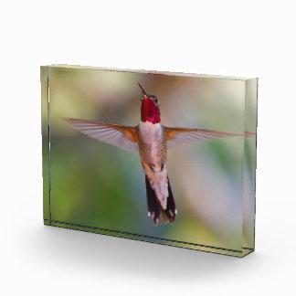 hummingbird in flight acrylic award