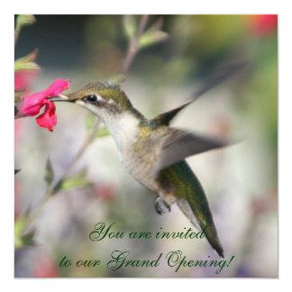 Hummingbird in flight card