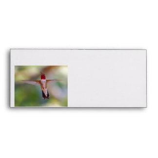 hummingbird in flight envelopes
