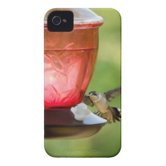 Hummingbird in Flight iPhone 4 Case