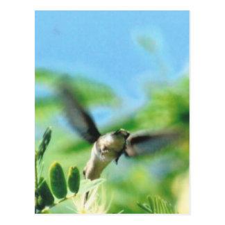 Hummingbird in Flight Photo Postcard