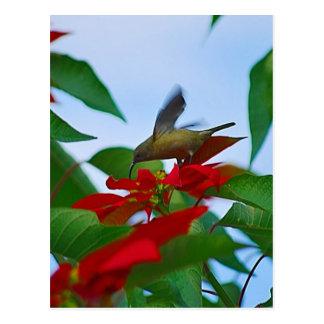 Hummingbird in flight postcard