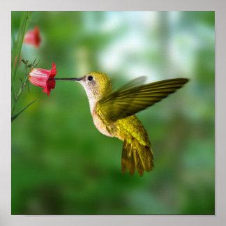 Hummingbird in Flight Print