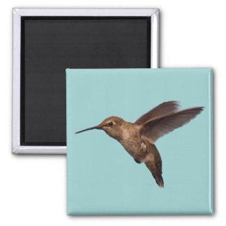 Hummingbird in Flight Square Magnet