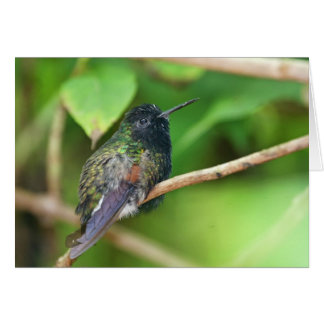 Hummingbird in Jungle Photo Card