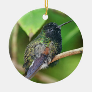 Hummingbird in Jungle Photo Ceramic Ornament
