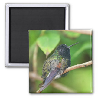 Hummingbird in Jungle Photo Magnet